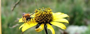 Si desaparecen los insectos, la economía mundial sufriría un enorme retroceso