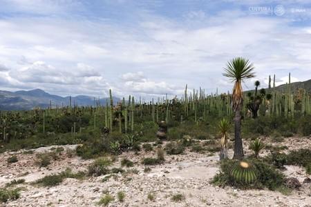 Por qué quieren nombrar Patrimonio Mundial al Valle de Tehuacán-Cuicatlán