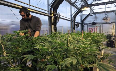 Qué efecto en la economía puede tener la legalización de la marihuana en España