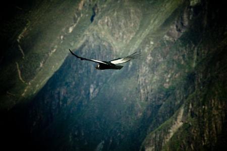 Avistamiento de aves: Rally de birdwatching en Perú