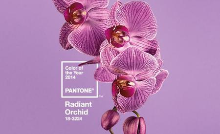 El 2014 ya tiene color: Orquídea Radiante