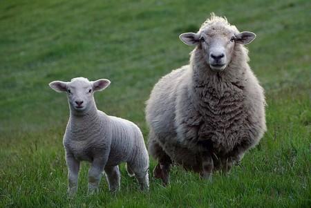 Los nuevos pastores se forman en las escuelas