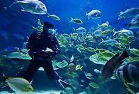 Bloody Bay (Islas Caimán), el mejor buceo del Caribe