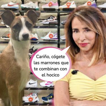 Estas son las Converse en versión 'mini' que María Patiño le ha comprado a su perro