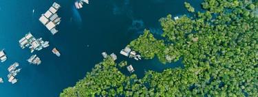 """""""Antes todo esto era selva"""": la mayor víctima de la guerra comercial entre China y Estados Unidos parece que va a ser el Amazonas"""