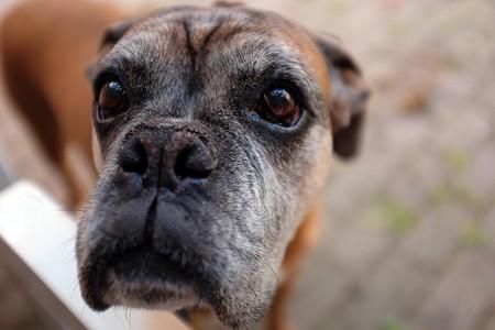 Como Fotografiar Mascotas I Perros 8