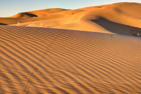 Un desierto de Sonora, México, será el campo de entrenamiento para una misión a Marte que se realizará en 2030