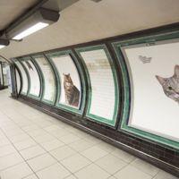 ¿Por qué toda la publicidad de una estación de metro ha sido reemplazada por gatos?