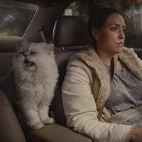 La venta del Honda Accord del 96 se desmadra: eBay cierra el anuncio y ya ofrecen 5.000 dólares por el gato