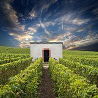 El Champagne y su región de producción incluidos como patrimonio mundial por la UNESCO