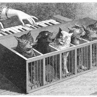 Al parecer, hubo peña hace siglos que ideó un instrumento musical que sonaba con gritos de gatos torturados