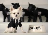 Paris Hilton se hace diseñadora de moda... para perros