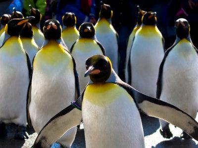 La Linux Foundation reimpulsa el kernel Real-Time Linux con el apoyo de Google, Intel e IBM