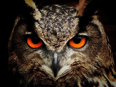 Owl 50267 1920