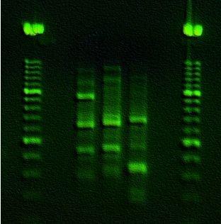 Retrato genético a partir de una gota de saliva