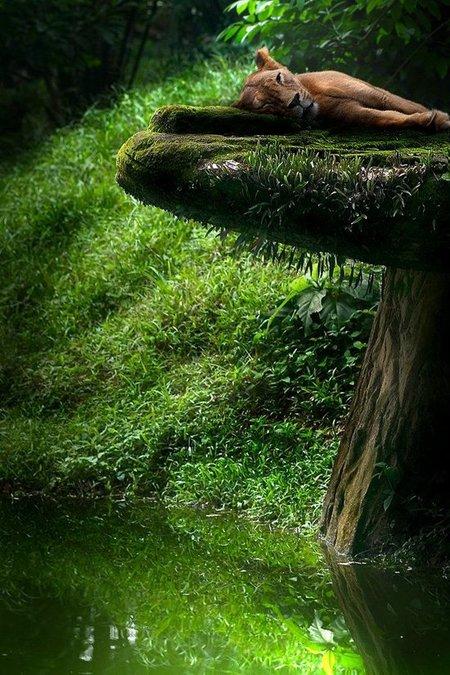 nature-photography-by-sam-lim-31.jpg