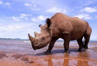 Los 10 mejores destinos para ver vida salvaje en Africa (V)
