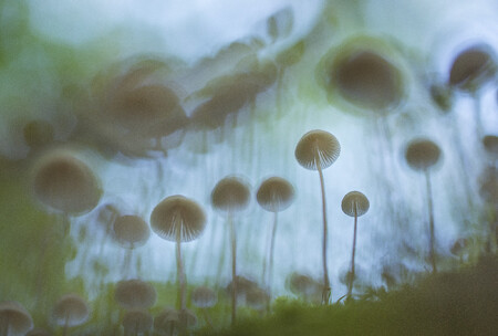 B4 2premio Imre Potyo B4 Mushroom
