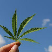 Y tras la burbuja de lo cripto... ahora llega la burbuja del cannabis
