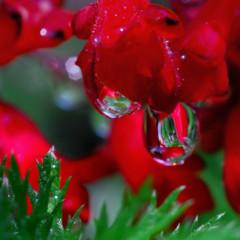 Foto 14 de 25 de la galería la-belleza-de-una-gota-de-agua en Xataka Foto