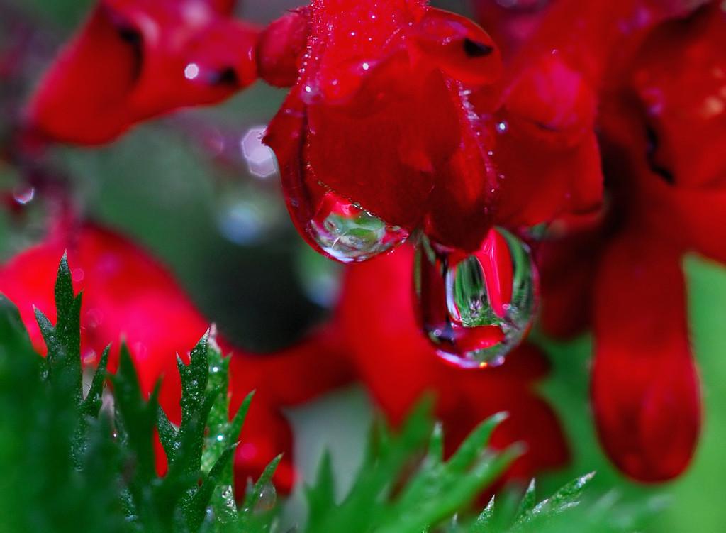 Foto de La belleza de una gota de agua (14/25)