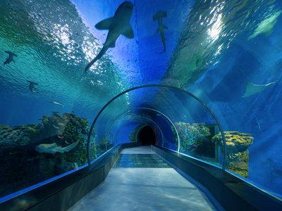 En Dubai pasar el control de seguridad del aeropuerto será como visitar un acuario mientras te escanean 80 cámaras