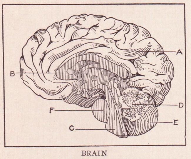 Cerebro Humo