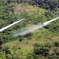 Colombia quiere que sus agricultores dejen de plantar coca. Hay un problema: es demasiado rentable
