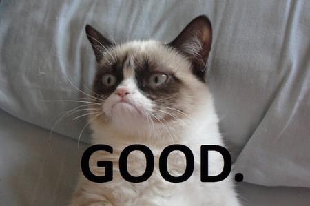 Sí, Grumpy Cat es ahora (sin planearlo) el gato más rico del mundo