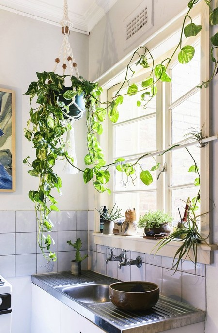 Nicolette Johnson Photographyhouseplants Enliven Small Space