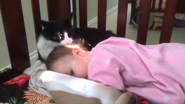 El caso del gato que asea al bebé de la familia