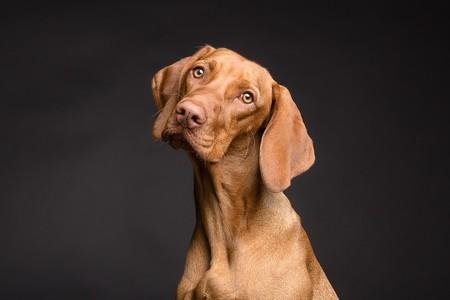 La inteligencia de los perros no parece tan especial si la comparamos con otros animales