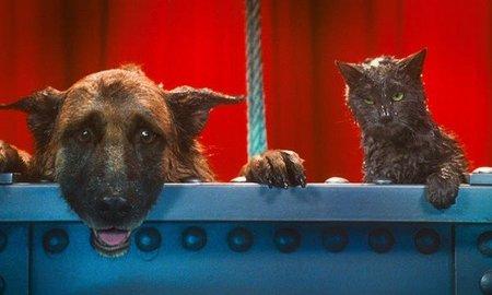 estrenos-como-perros-y-gatos-2-foto.jpg