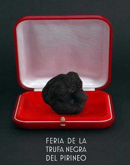 Feria de la trufa negra en Huesca