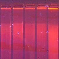 ¿Qué es la plasticidad fenotípica?