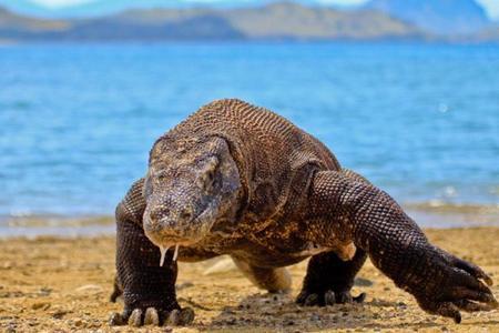 Parque Nacional de Komodo. La maravillosa isla de Flores. Indonesia (y III)