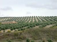 Cambios en las cotizaciones del régimen especial agrario