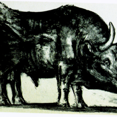 Foto 2 de 11 de la galería toro-de-picasso en Applesfera