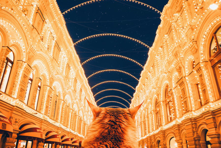 Ginger Cat Photography Kotleta Cutlet Kristina Makeeva Hobopeeba 49