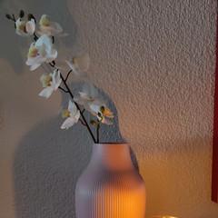Foto 19 de 59 de la galería oneplus-8-pro-galeria-fotografica en Xataka