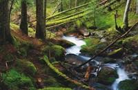 'Parques Nacionales de España', un libro para planear rutas naturales