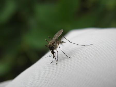 Siete picaduras de diferentes insectos: así las podemos reconocer y tratar para aliviarlas