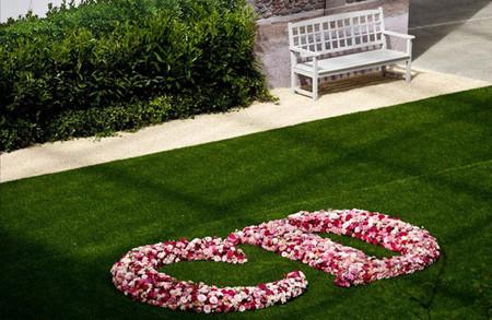 CD en rosas