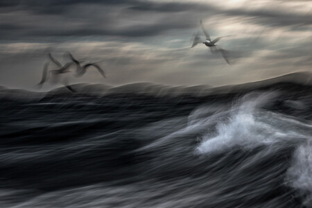Npoty Photo Contest 2020 Restless Sea Jiri Hrebicek Runner Up C1 Birds