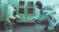 Sitges 09 | Quinta jornada | Decepcionante 'Splice', excelente 'Metropia' y absurdo remake de 'Teniente corrupto'