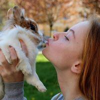El secreto del orgasmo femenino se encuentra en el conejo: su misión es activar la ovulación