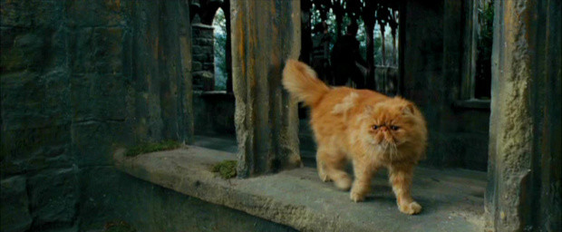 Harry Potter Gatos