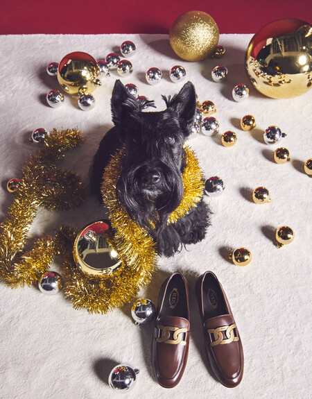 Tod S 2020 A Pawfect Holiday 5