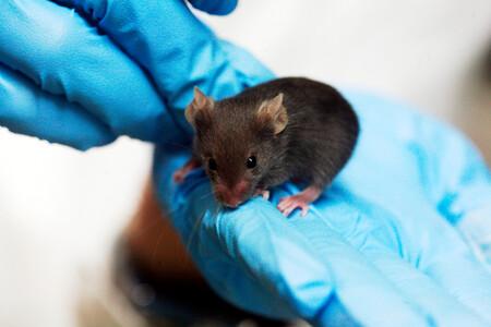 La UE pide no experimentar con animales en la lucha contra el covid. Y muchos científicos se oponen