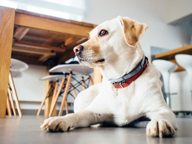 Vivir con perros beneficia la salud cardiovascular